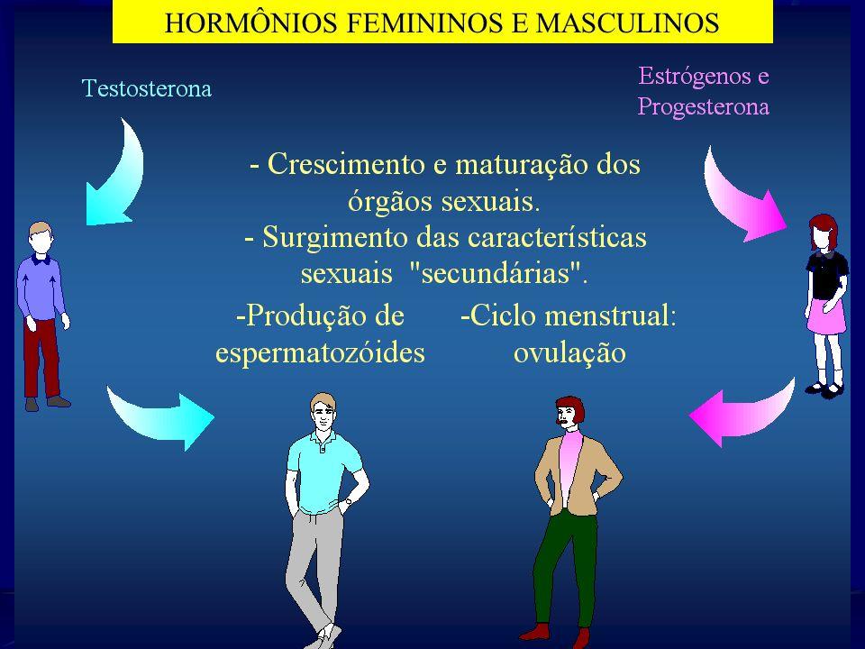 hCG Hormônios ovarianos estrógenos Progesterona