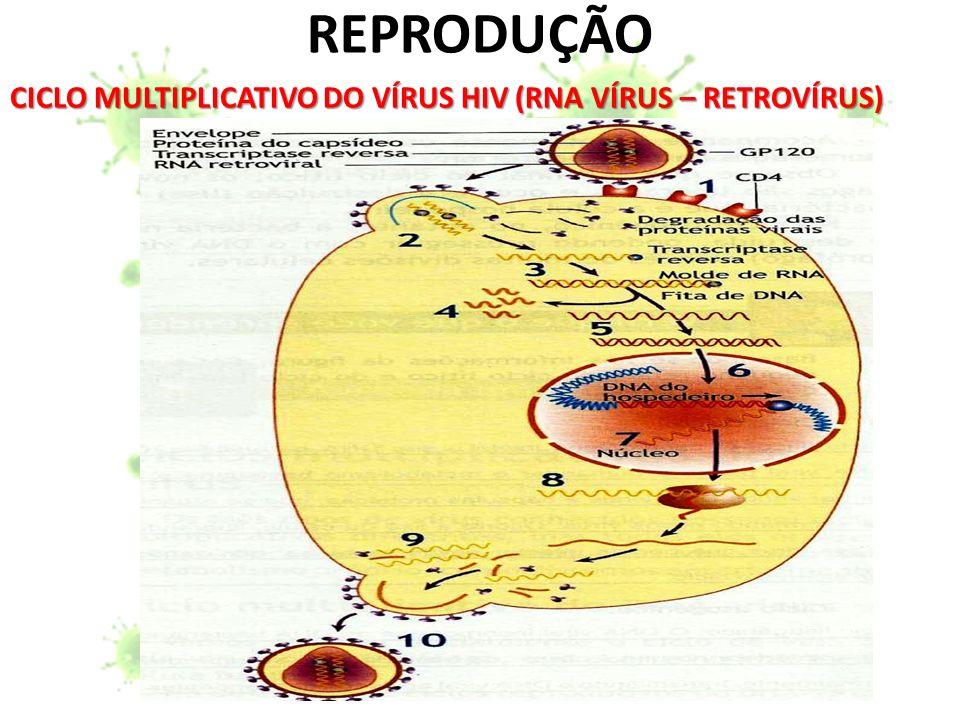 REPRODUÇÃO CICLO MULTIPLICATIVO DO VÍRUS HIV (RNA VÍRUS – RETROVÍRUS)