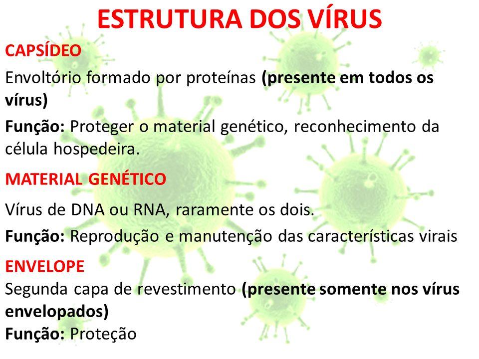 RAIVA (HIDROFOBIA) VIROSES