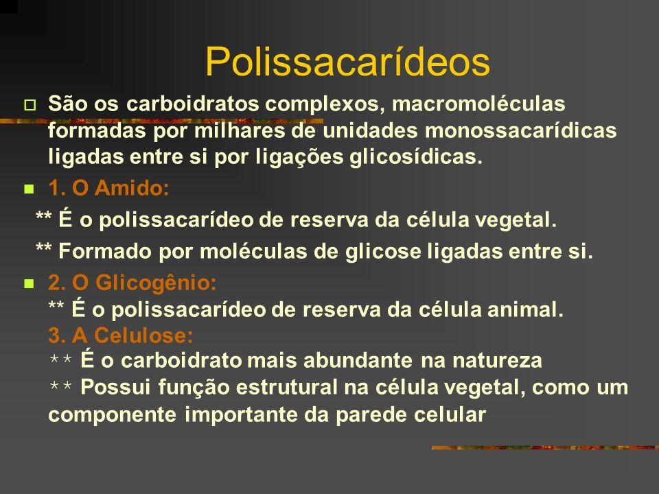 Polissacarídeos São os carboidratos complexos, macromoléculas formadas por milhares de unidades monossacarídicas ligadas entre si por ligações glicosí