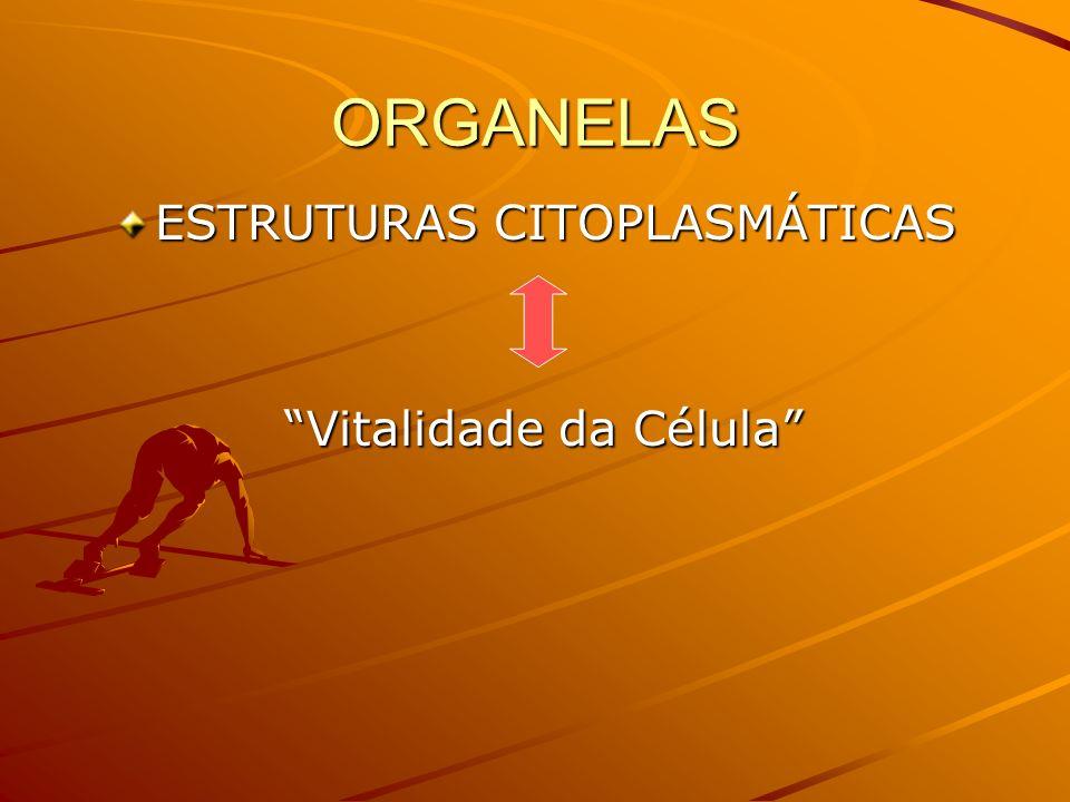 ORGANELAS CITOPLASMÁTICAS CITOPLASMÁTICAS BIOLOGIA – YES, WE CAN! Prof. Thiago Moraes Lima