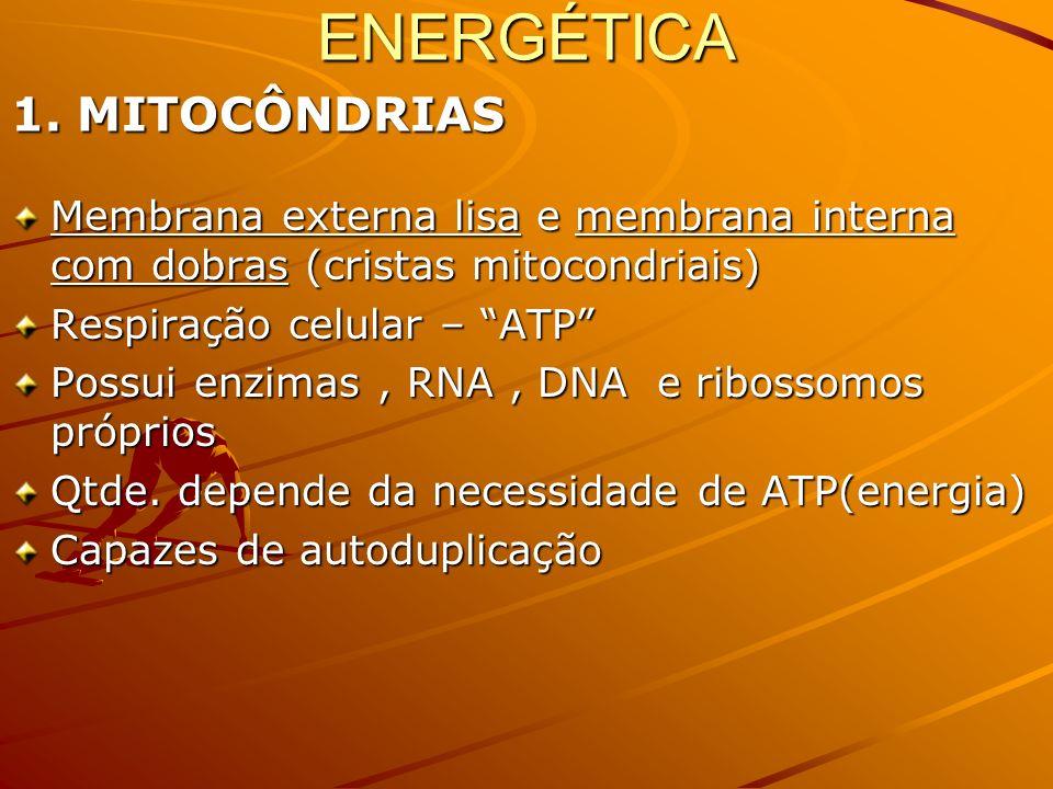 VACÚOLO PULSÁTIL Só em protozoários de ÁGUA DOCE BOMBA D ÁGUA