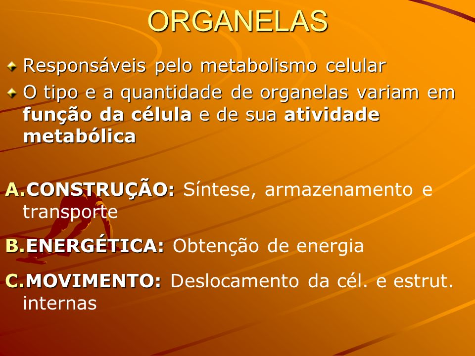 ORGANELAS Responsáveis pelo metabolismo celular O tipo e a quantidade de organelas variam em função da célula e de sua atividade metabólica A.CONSTRUÇÃO: A.CONSTRUÇÃO: Síntese, armazenamento e transporte B.ENERGÉTICA: B.ENERGÉTICA: Obtenção de energia C.MOVIMENTO: C.MOVIMENTO: Deslocamento da cél.