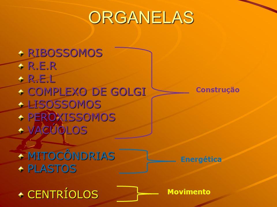 ORGANELAS RIBOSSOMOS R.E.R R.E.L COMPLEXO DE GOLGI LISOSSOMOS PEROXISSOMOS VACÚOLOS MITOCÔNDRIAS PLASTOS CENTRÍOLOS Construção Energética Movimento