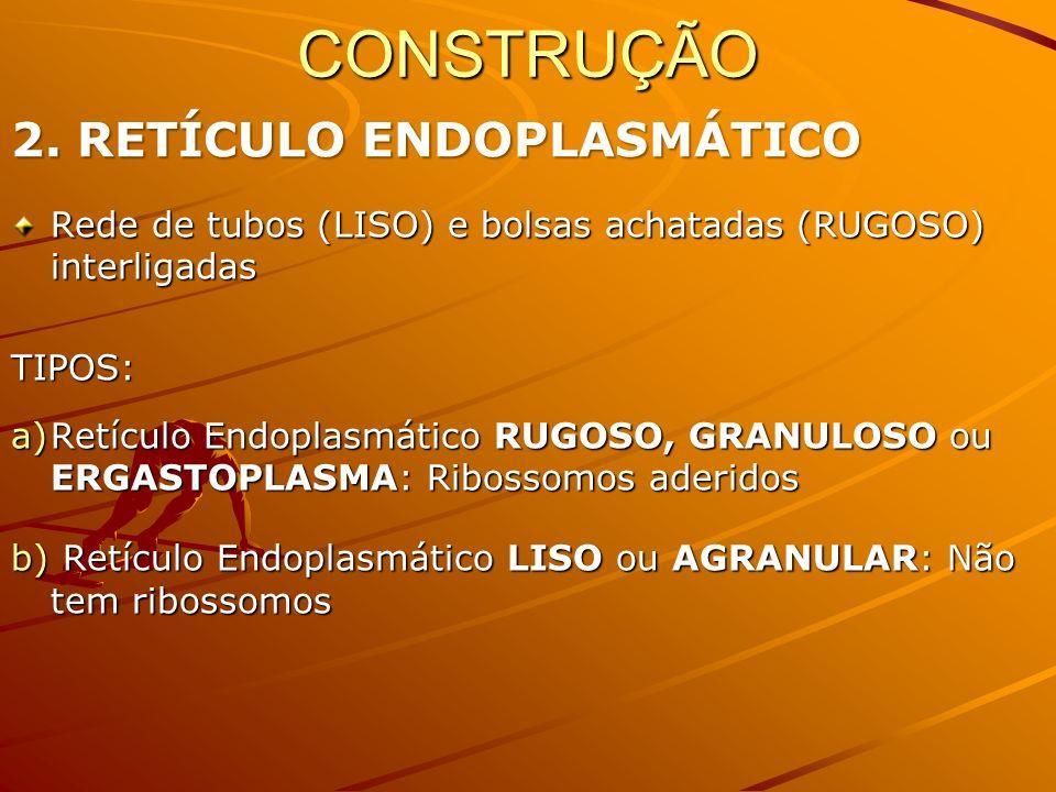 Rede de tubos (LISO) e bolsas achatadas (RUGOSO) interligadas TIPOS: a)Retículo Endoplasmático RUGOSO, GRANULOSO ou ERGASTOPLASMA: Ribossomos aderidos b) Retículo Endoplasmático LISO ou AGRANULAR: Não tem ribossomos CONSTRUÇÃO 2.