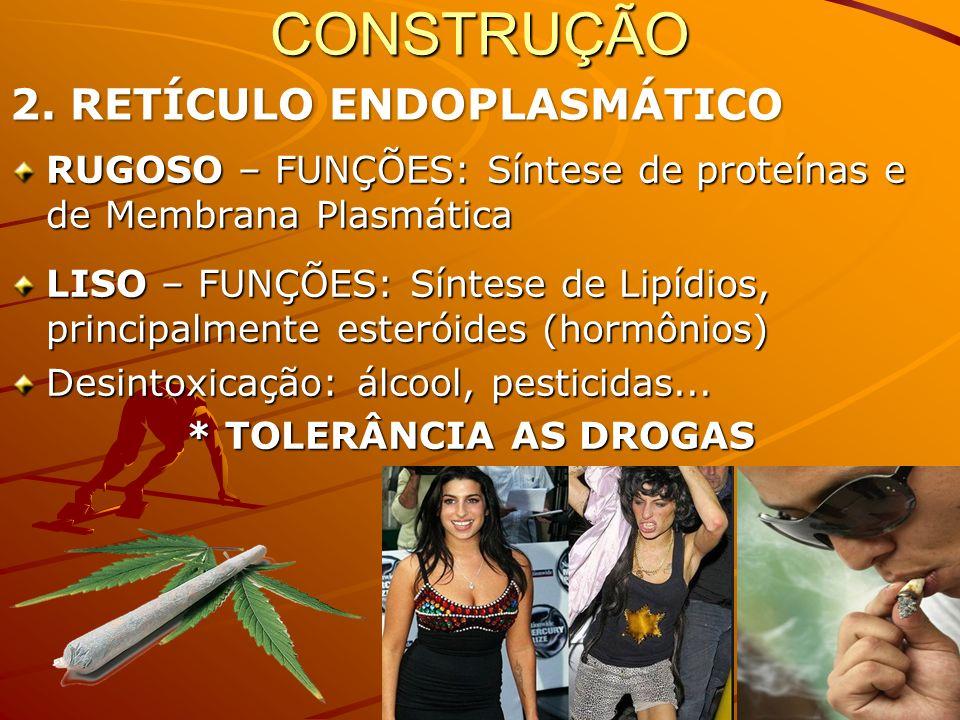 RUGOSO – FUNÇÕES: Síntese de proteínas e de Membrana Plasmática LISO – FUNÇÕES: Síntese de Lipídios, principalmente esteróides (hormônios) Desintoxicação: álcool, pesticidas...
