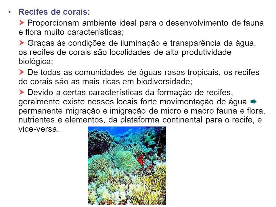 Recifes de corais: Proporcionam ambiente ideal para o desenvolvimento de fauna e flora muito características; Graças às condições de iluminação e tran