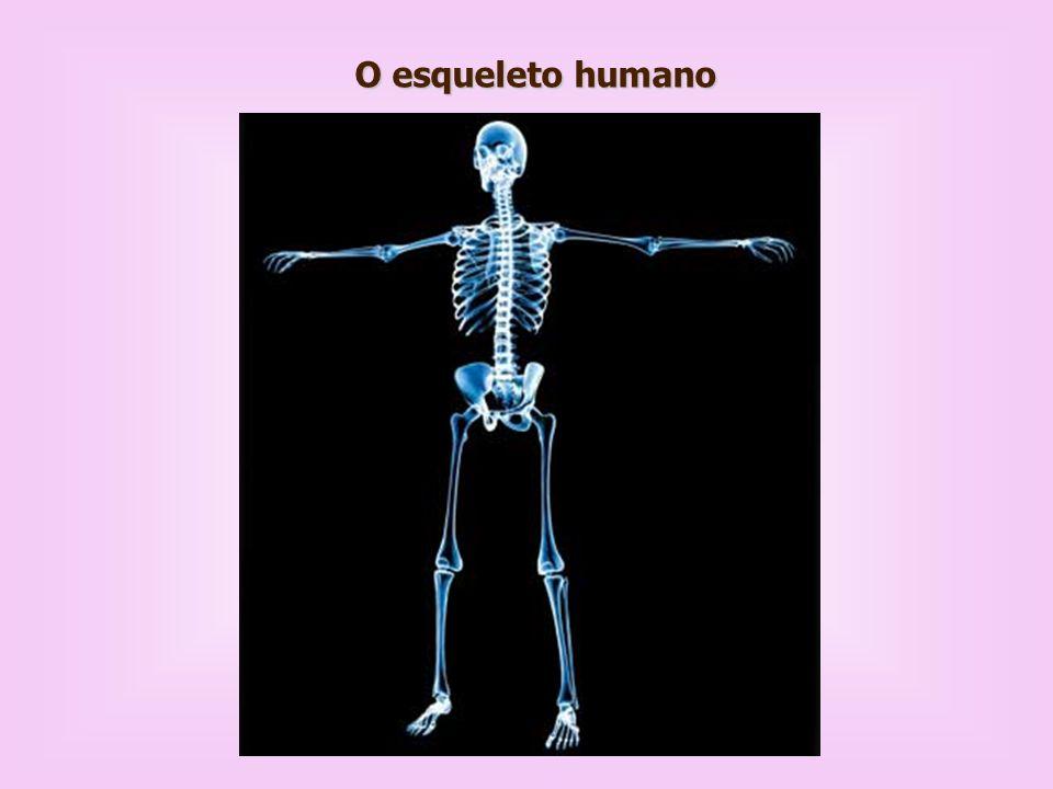 Funções do esqueleto: Sustentação, Proteção, Movimento, Armazenamento e homeostase mineral (especialmente cálcio e fósforo), Local de produção de células do sangue, Armazenamento de lipídios.