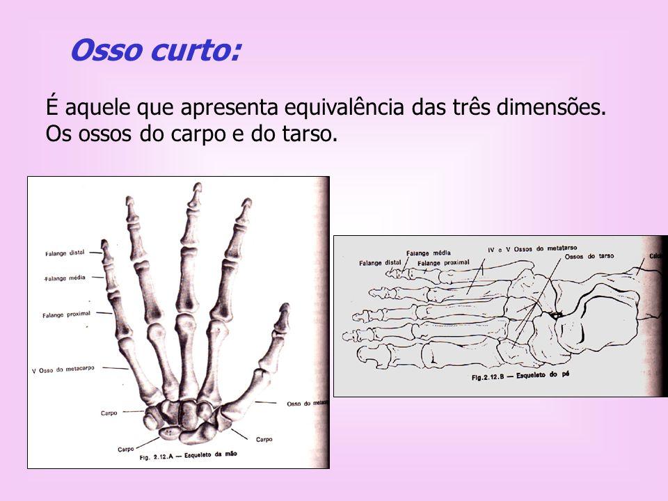 Juntas e articulações Junta é o local de junção entre dois ou mais ossos.