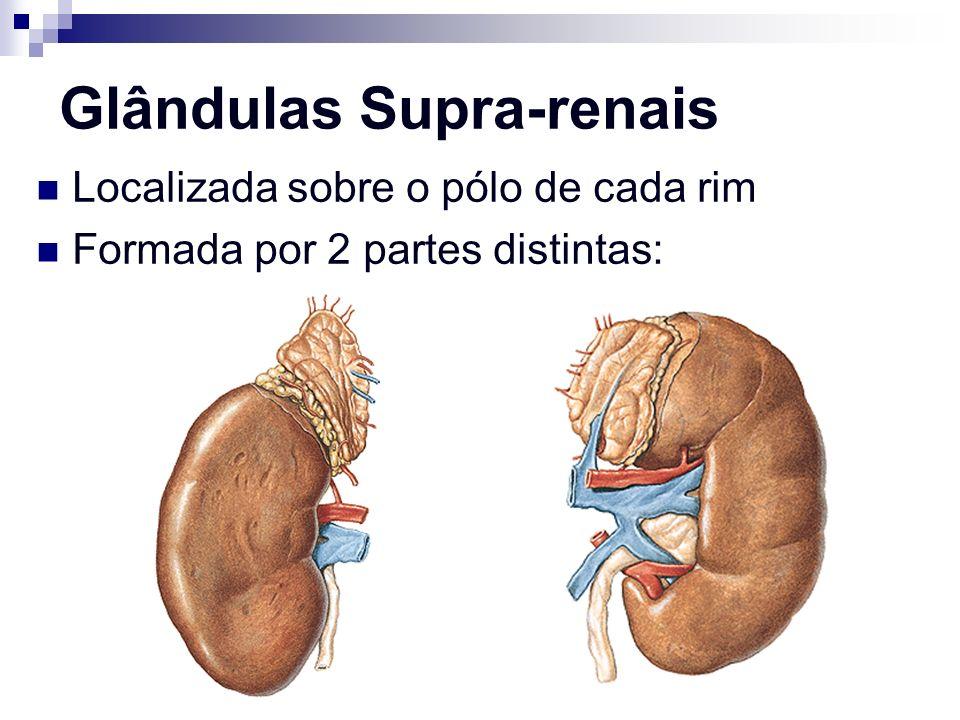 Glândulas Supra-renais Localizada sobre o pólo de cada rim Formada por 2 partes distintas: