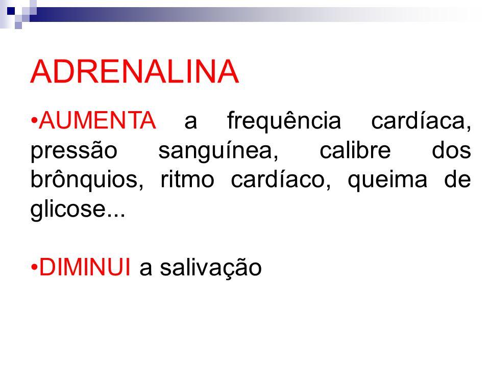 ADRENALINA AUMENTA a frequência cardíaca, pressão sanguínea, calibre dos brônquios, ritmo cardíaco, queima de glicose... DIMINUI a salivação