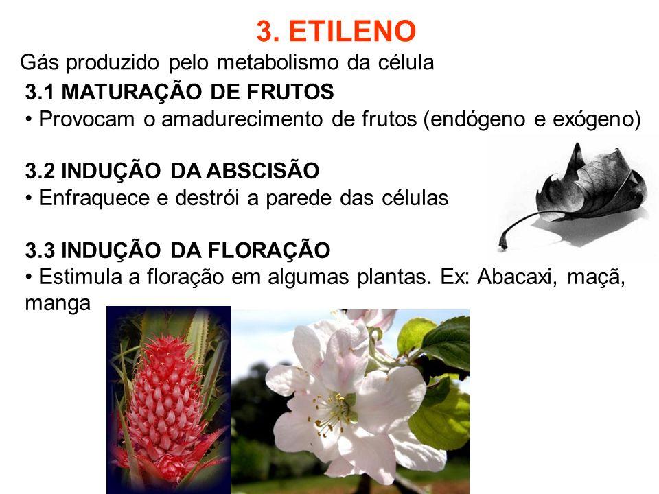 3. ETILENO Gás produzido pelo metabolismo da célula 3.1 MATURAÇÃO DE FRUTOS Provocam o amadurecimento de frutos (endógeno e exógeno) 3.2 INDUÇÃO DA AB