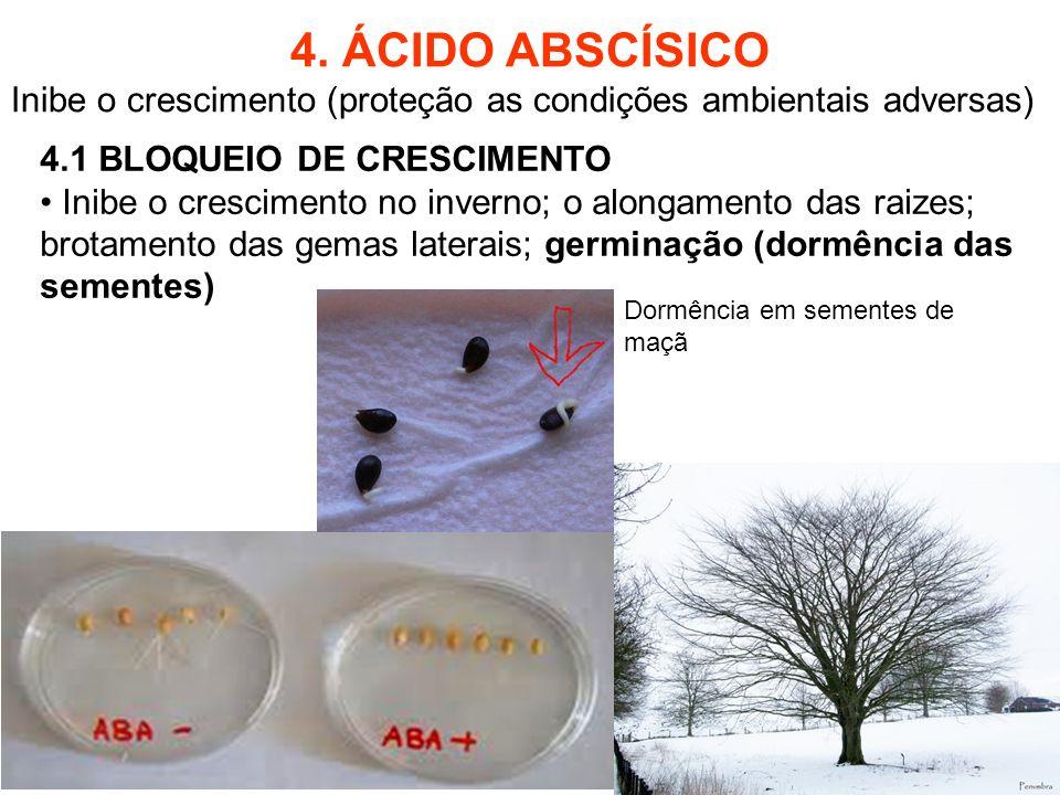 4. ÁCIDO ABSCÍSICO Inibe o crescimento (proteção as condições ambientais adversas) 4.1 BLOQUEIO DE CRESCIMENTO Inibe o crescimento no inverno; o along