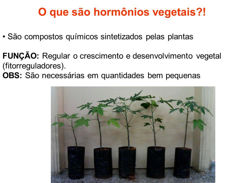 O que são hormônios vegetais?! São compostos químicos sintetizados pelas plantas FUNÇÃO: Regular o crescimento e desenvolvimento vegetal (fitorregulad