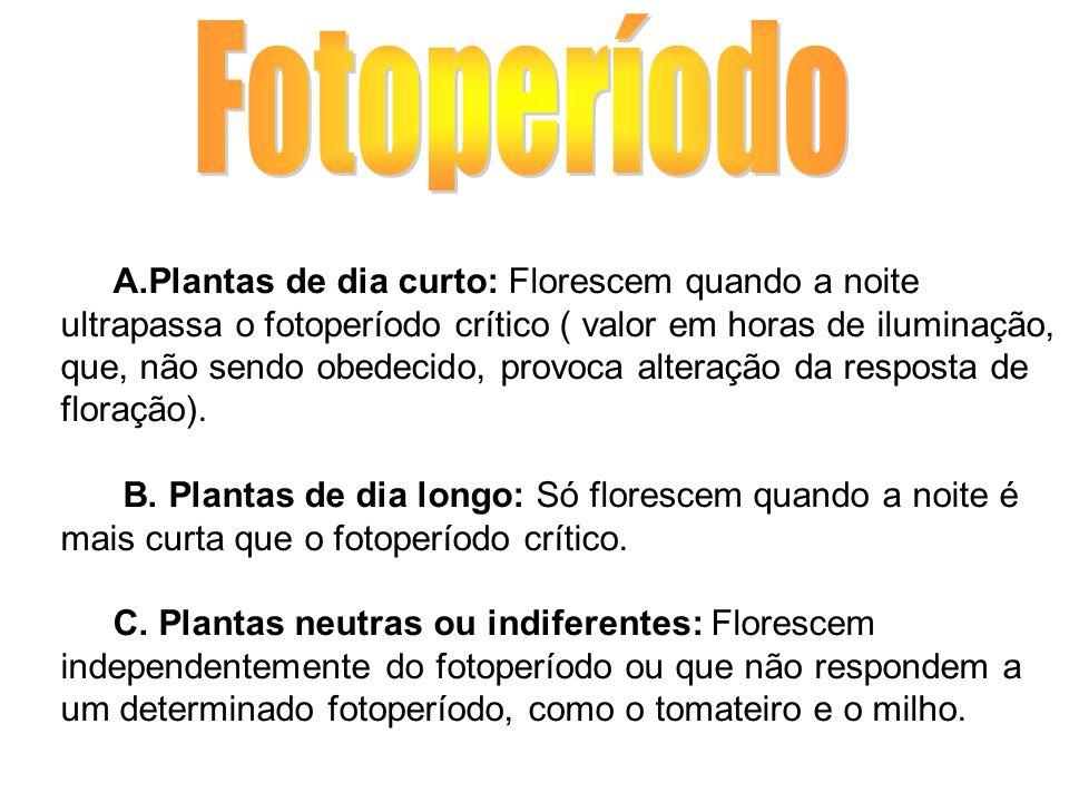 A.Plantas de dia curto: Florescem quando a noite ultrapassa o fotoperíodo crítico ( valor em horas de iluminação, que, não sendo obedecido, provoca al