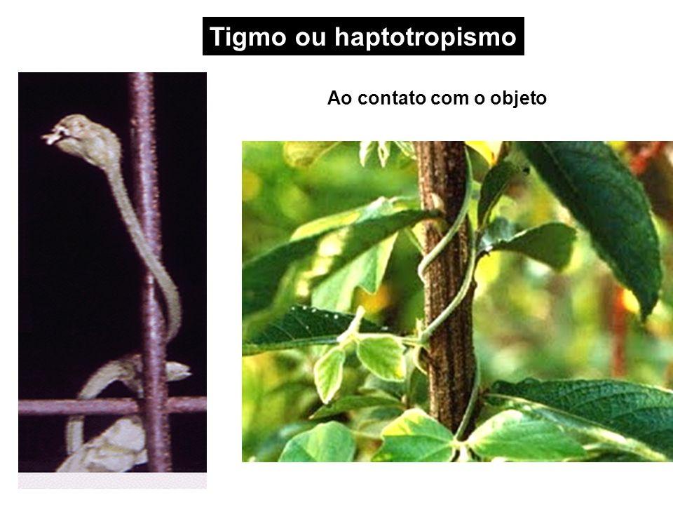 Tigmo ou haptotropismo Ao contato com o objeto