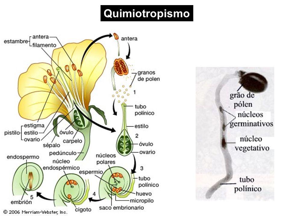 Quimiotropismo