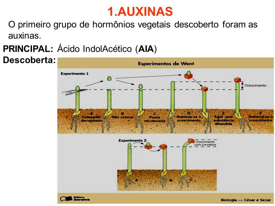 1.AUXINAS O primeiro grupo de hormônios vegetais descoberto foram as auxinas. PRINCIPAL: Ácido IndolAcético (AIA) Descoberta: