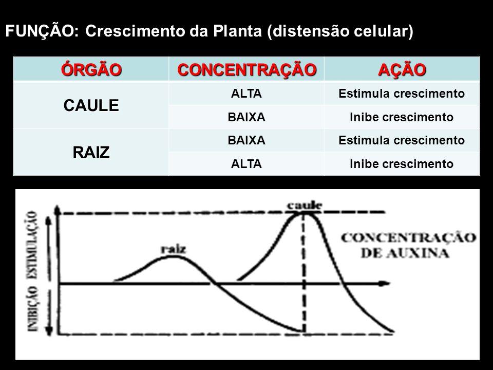 FUNÇÃO: Crescimento da Planta (distensão celular)ÓRGÃOCONCENTRAÇÃOAÇÃOCAULE ALTAEstimula crescimento BAIXAInibe crescimento RAIZ BAIXAEstimula crescim