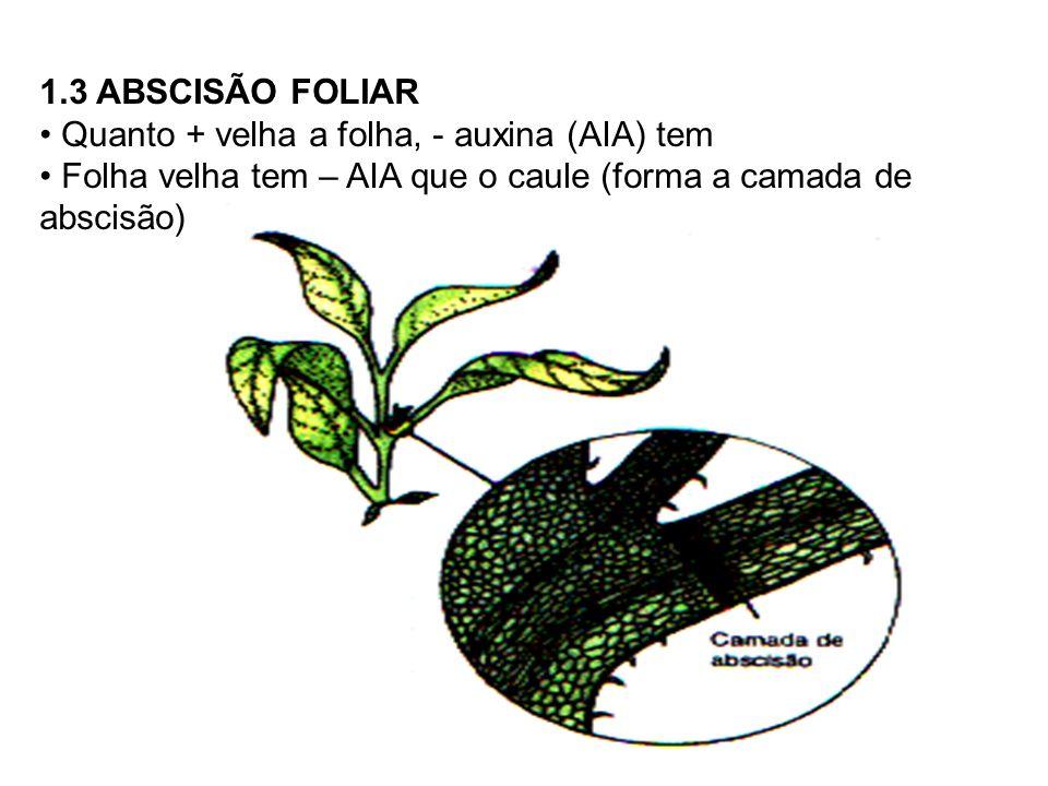 1.4 FORMAÇÃO DE FRUTOS Responsável pelo desenvolvimento do ovário Produção artificial de frutos -> Aplicação de AIA = FRUTO PARTENOCÁRPICO (Virgem)