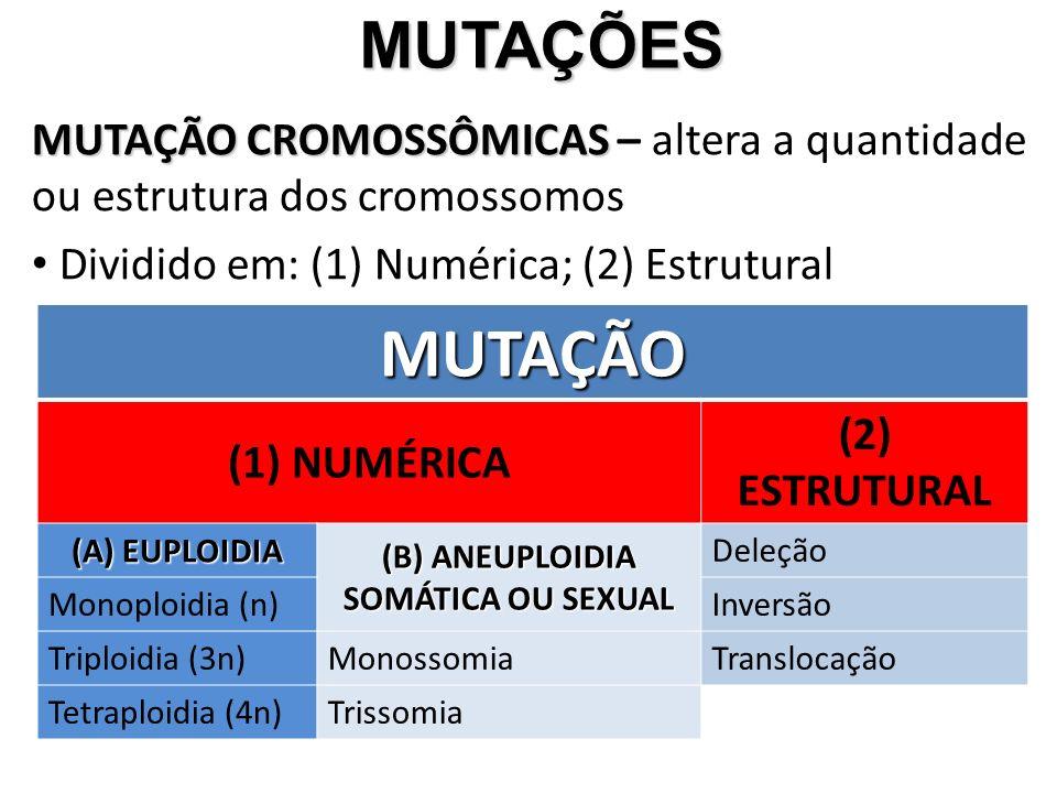 MUTAÇÕES MUTAÇÕES MUTAÇÃO CROMOSSÔMICAS MUTAÇÃO CROMOSSÔMICAS – altera a quantidade ou estrutura dos cromossomos Dividido em: (1) Numérica; (2) Estrutural MUTAÇÃO (1) NUMÉRICA (2) ESTRUTURAL (A) EUPLOIDIA (B) ANEUPLOIDIA SOMÁTICA OU SEXUAL Deleção Monoploidia (n)Inversão Triploidia (3n)MonossomiaTranslocação Tetraploidia (4n)Trissomia