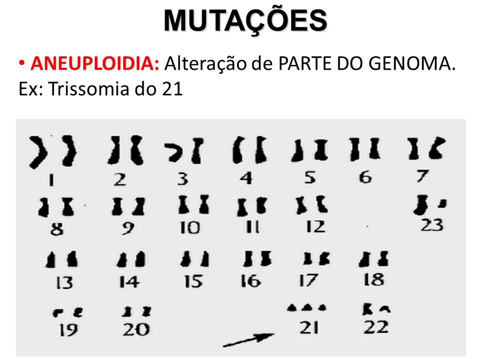 MUTAÇÕES MUTAÇÕES ANEUPLOIDIA: Alteração de PARTE DO GENOMA. Ex: Trissomia do 21