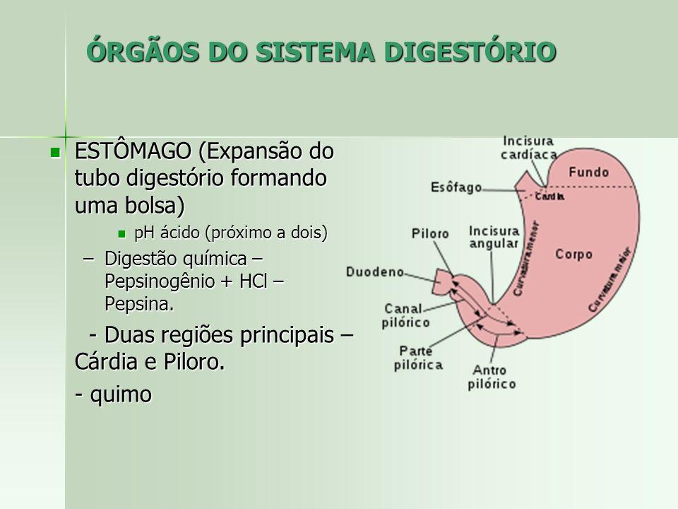 ÓRGÃOS DO SISTEMA DIGESTÓRIO ESTÔMAGO (Expansão do tubo digestório formando uma bolsa) ESTÔMAGO (Expansão do tubo digestório formando uma bolsa) pH ácido (próximo a dois) pH ácido (próximo a dois) –Digestão química – Pepsinogênio + HCl – Pepsina.