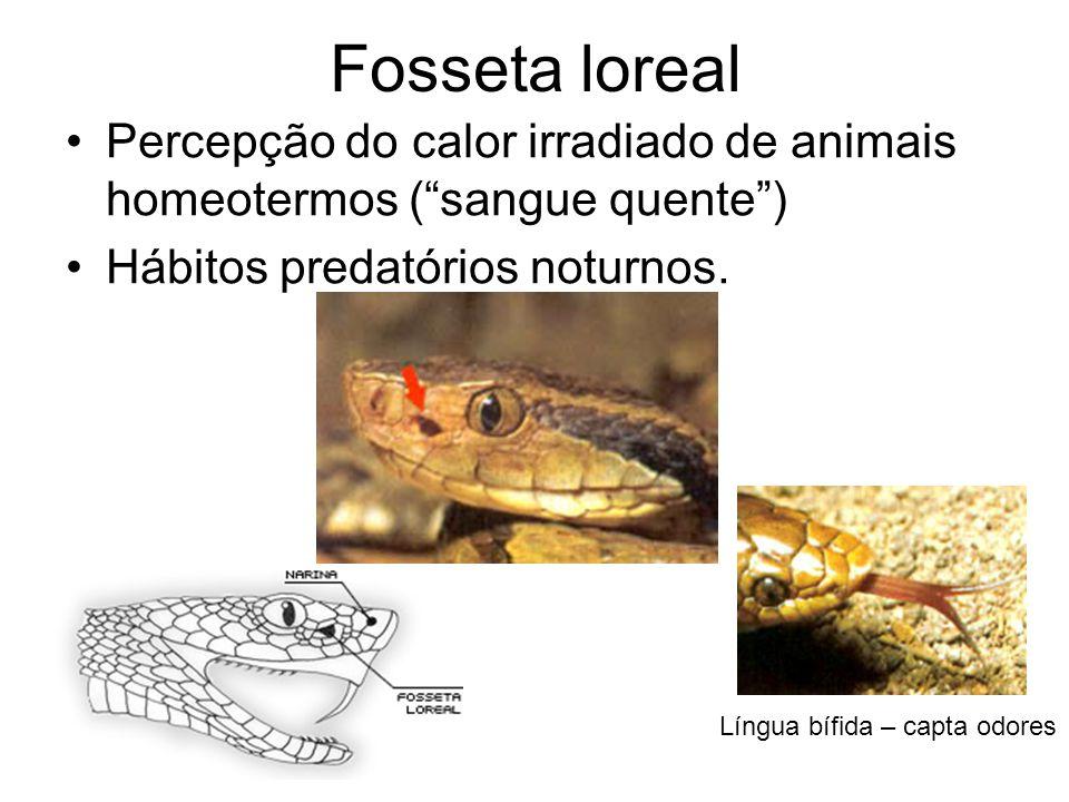 Fosseta loreal Percepção do calor irradiado de animais homeotermos (sangue quente) Hábitos predatórios noturnos.