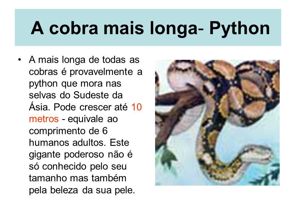 A cobra mais longa- Python A mais longa de todas as cobras é provavelmente a python que mora nas selvas do Sudeste da Ásia.