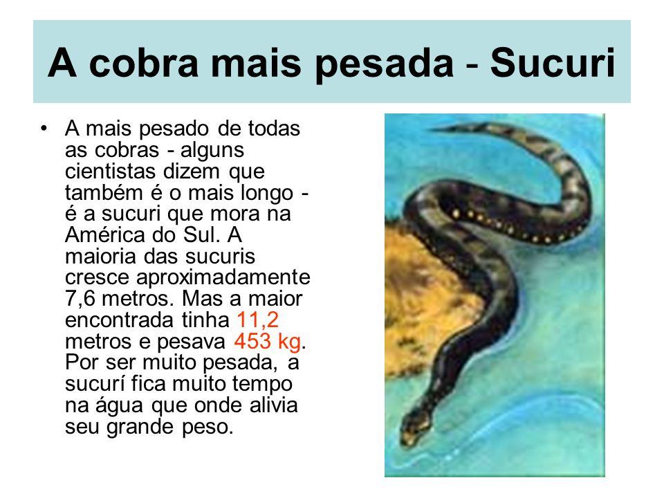 A cobra mais pesada - Sucuri A mais pesado de todas as cobras - alguns cientistas dizem que também é o mais longo - é a sucuri que mora na América do Sul.