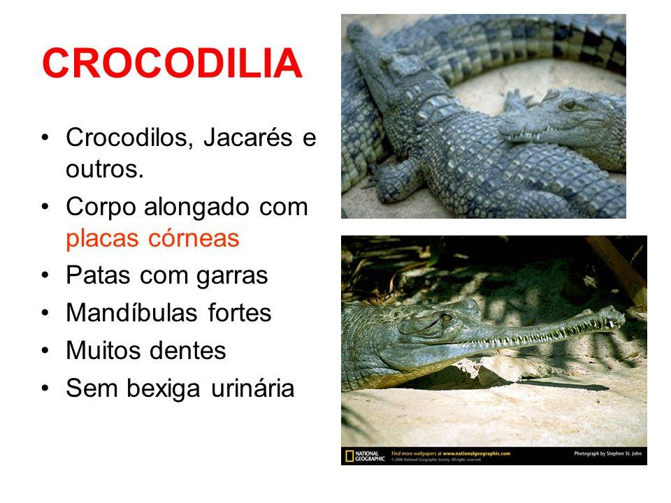 QUELONIA Com concha dorsal óssea Boca sem dentes Ex.: - Tartarugas Marinhas e Dulcícolas -Jabutis (terrestres) -Cágados (dulcícolas)
