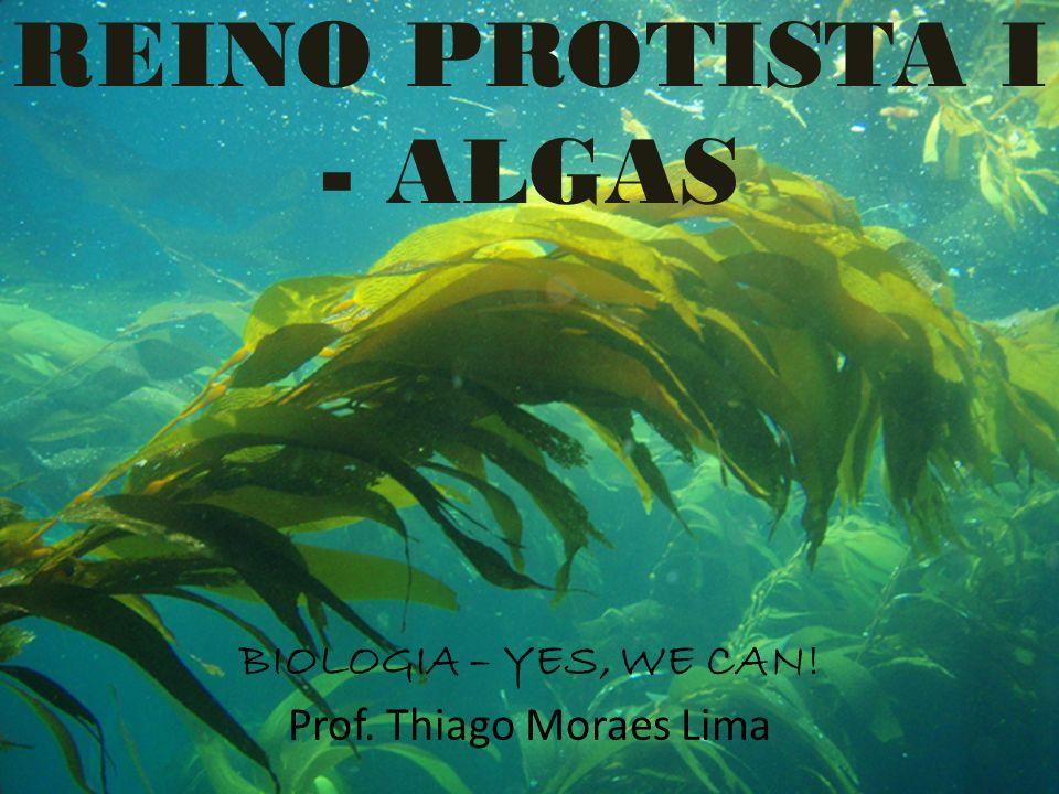 REINO PROTISTA I - ALGAS BIOLOGIA – YES, WE CAN! Prof. Thiago Moraes Lima