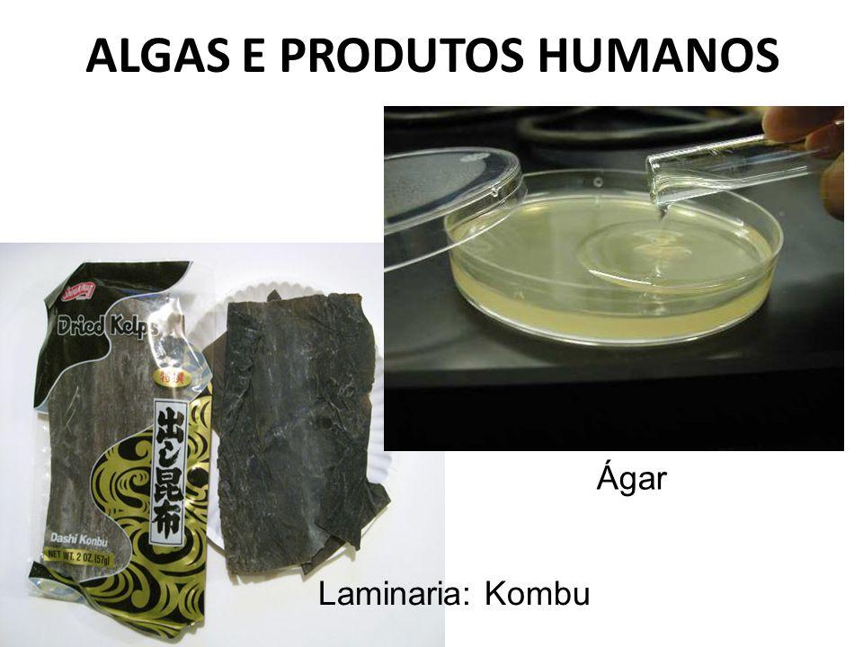 ALGAS E PRODUTOS HUMANOS Ágar Laminaria: Kombu