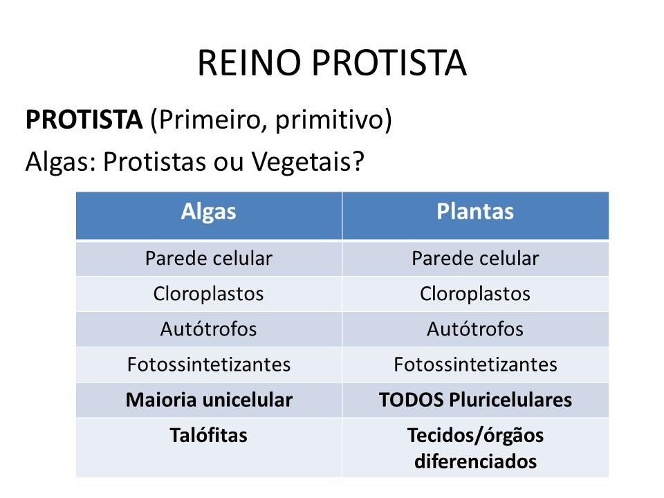 REINO PROTISTA PROTISTA (Primeiro, primitivo) Algas: Protistas ou Vegetais? AlgasPlantas Parede celular Cloroplastos Autótrofos Fotossintetizantes Mai