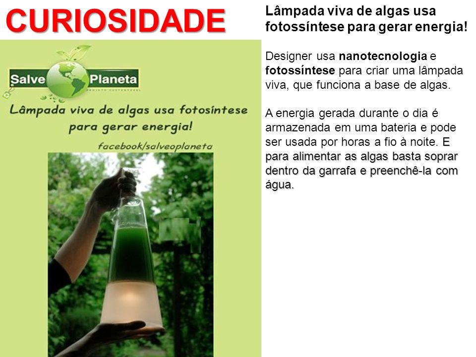 Lâmpada viva de algas usa fotossíntese para gerar energia! Designer usa nanotecnologia e fotossíntese para criar uma lâmpada viva, que funciona a base