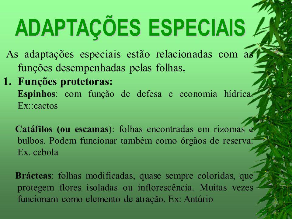 As adaptações especiais estão relacionadas com as funções desempenhadas pelas folhas.