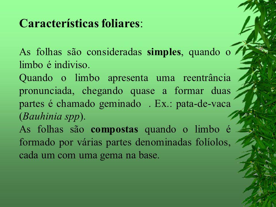 Características foliares: As folhas são consideradas simples, quando o limbo é indiviso.