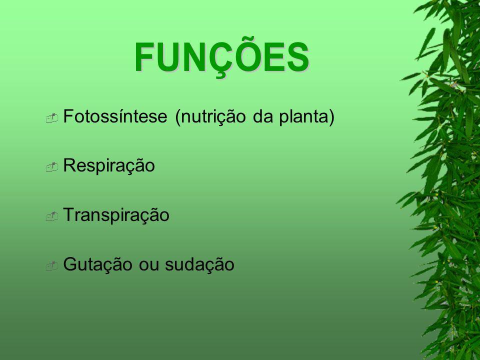 Fotossíntese (nutrição da planta) Respiração Transpiração Gutação ou sudação