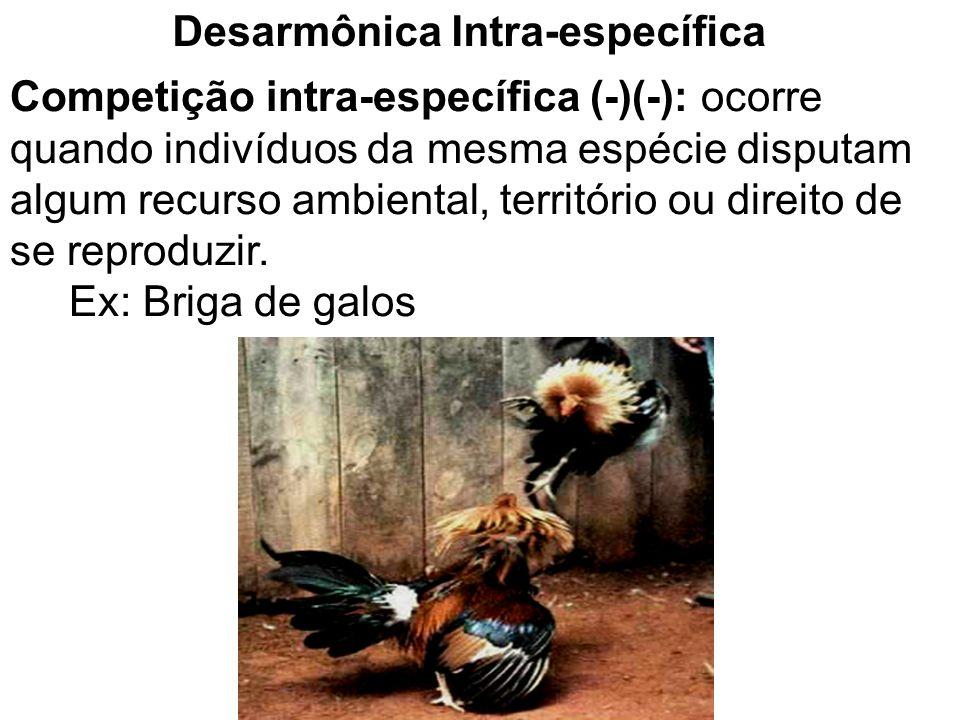 Competição interespecífica (+)(-): ocorre quando dois organismos de espécies diferentes ocupam o mesmo nicho (local de reprodução, alimento, moradia) ou seja, disputando os mesmos recursos ambientais.