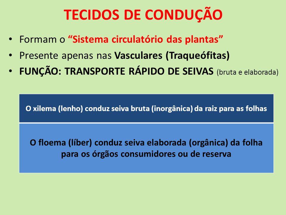 TECIDOS DE CONDUÇÃO Formam o Sistema circulatório das plantas Presente apenas nas Vasculares (Traqueófitas) FUNÇÃO: TRANSPORTE RÁPIDO DE SEIVAS (bruta
