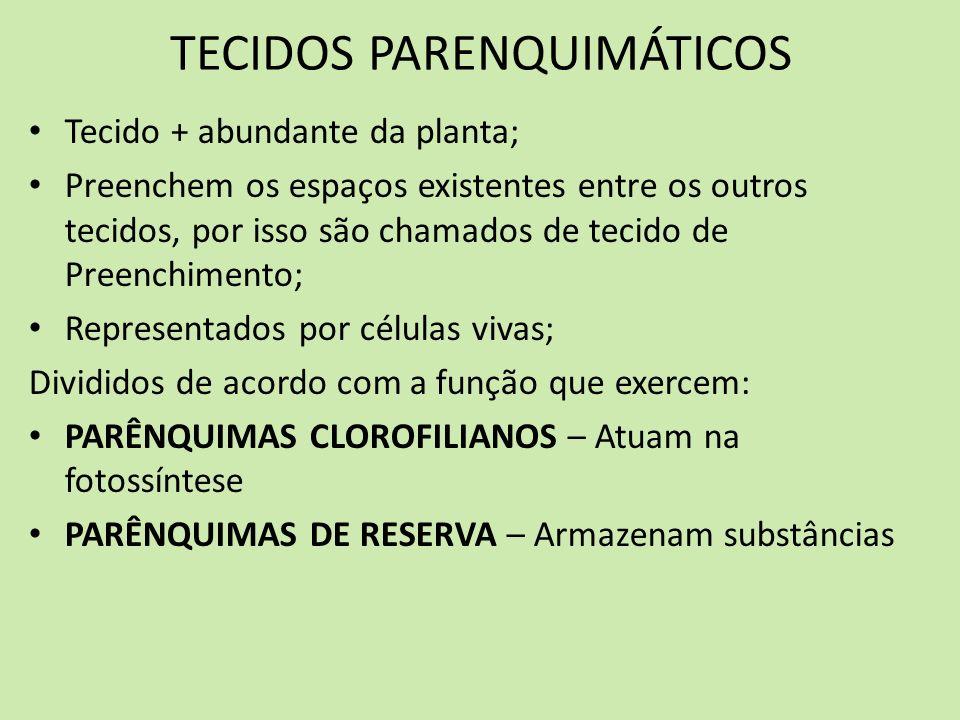 TECIDOS PARENQUIMÁTICOS PARÊNQUIMAS CLOROFILIANOS Presentes nas folhas, contêm cloroplastos (realizam fotossíntese) PARÊNQUIMA PALIÇÁDICO Sob (abaixo) a epiderme SUPERIOR das folhas Células alongadas, justapostas e com vários cloroplastos Tecido + importante na fotossíntese PARÊNQUIMA LACUNOSO Sobre (acima) a epiderme INFERIOR das folhas Células irregulares, espaçadas e com poucos cloroplastos PERMITEM A SAÍDA DE VAPORES DE H 2 O