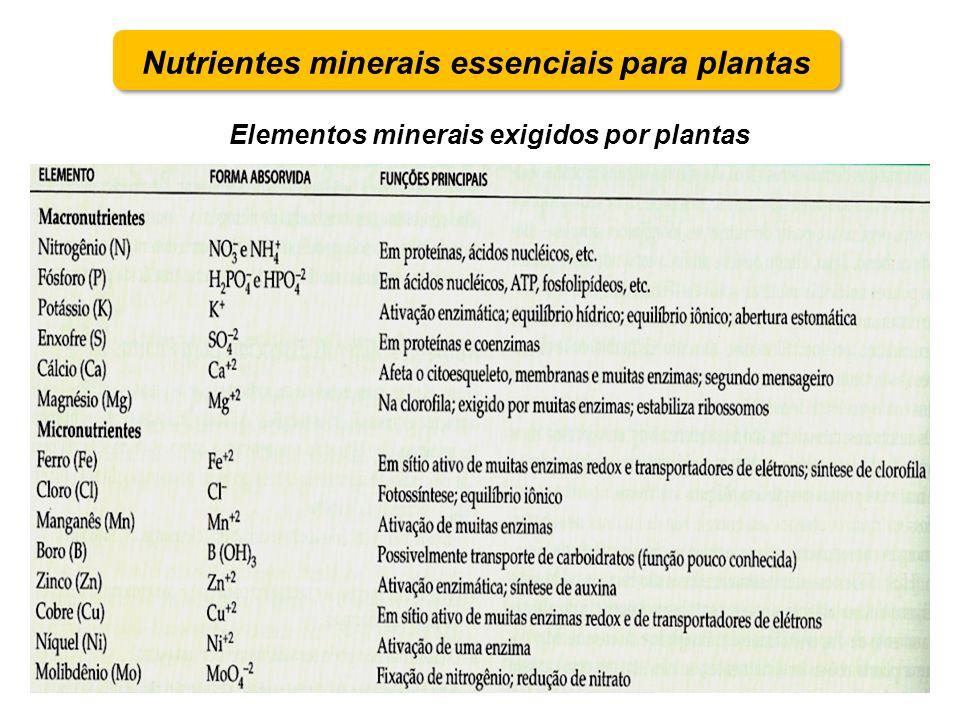 Elementos minerais exigidos por plantas