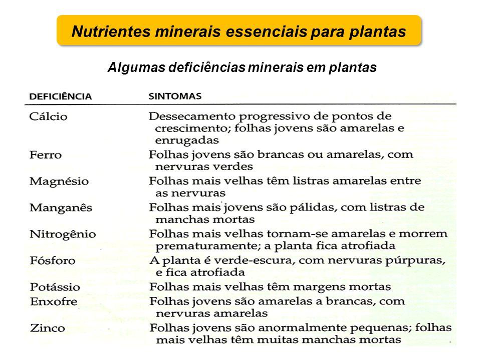 Nutrientes minerais essenciais para plantas Algumas deficiências minerais em plantas