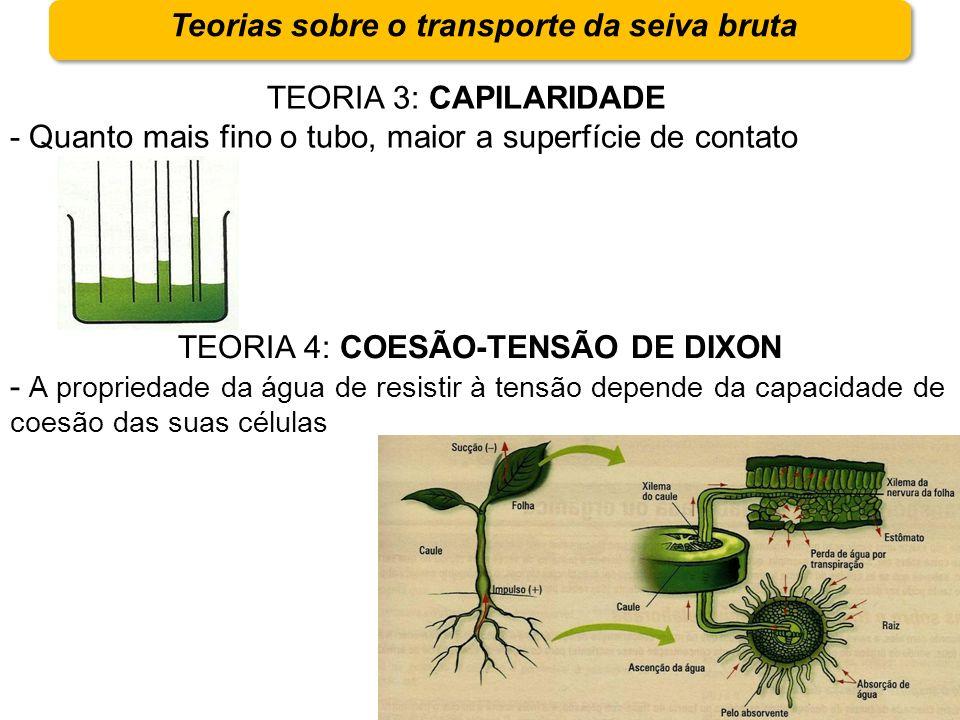 Teorias sobre o transporte da seiva bruta TEORIA 3: CAPILARIDADE - Quanto mais fino o tubo, maior a superfície de contato TEORIA 4: COESÃO-TENSÃO DE D