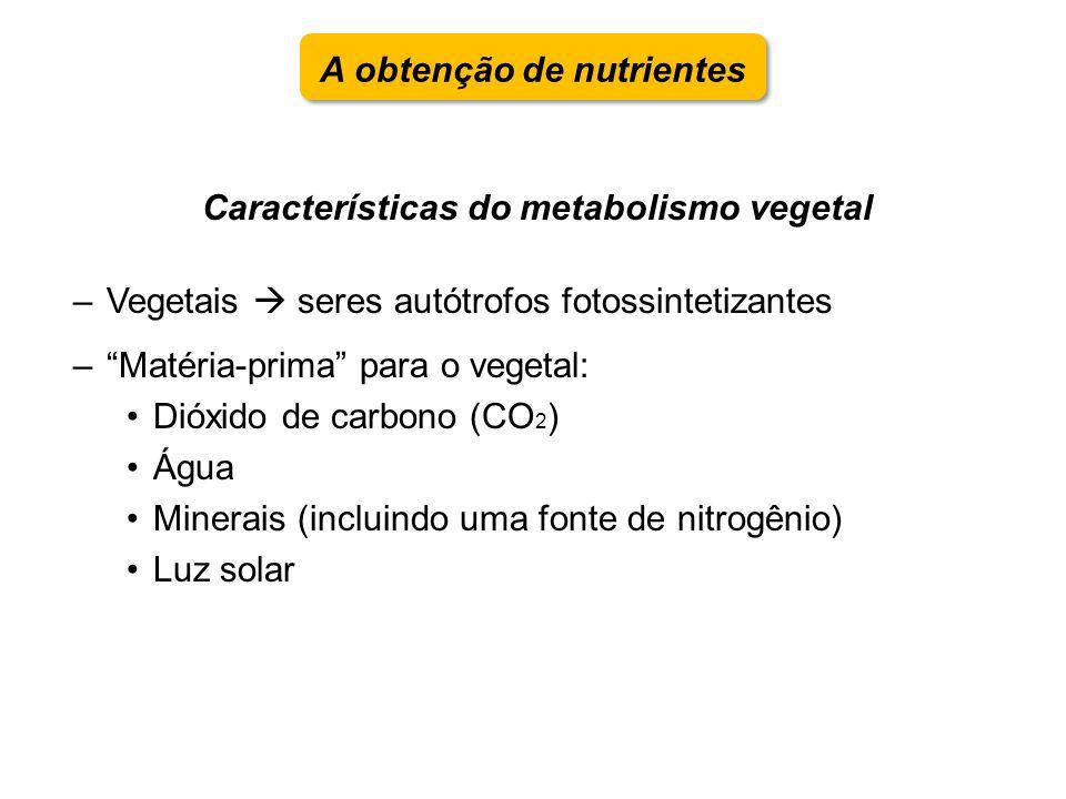 Características do metabolismo vegetal –Vegetais seres autótrofos fotossintetizantes –Matéria-prima para o vegetal: Dióxido de carbono (CO 2 ) Água Mi