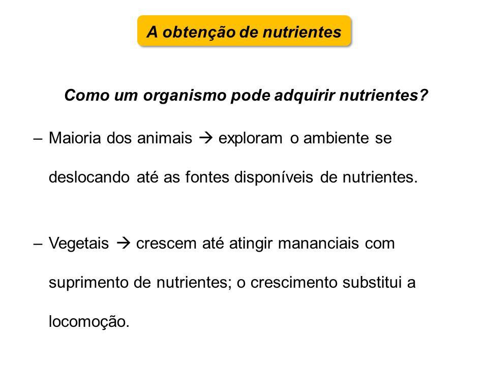 Como um organismo pode adquirir nutrientes? –Maioria dos animais exploram o ambiente se deslocando até as fontes disponíveis de nutrientes. –Vegetais