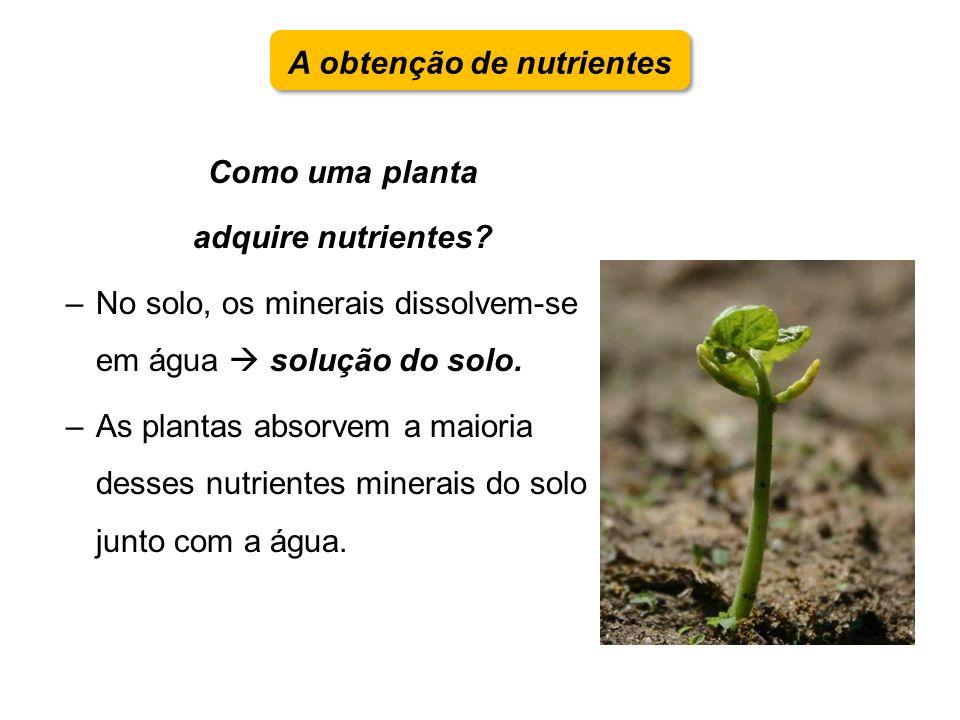 Como uma planta adquire nutrientes? –No solo, os minerais dissolvem-se em água solução do solo. –As plantas absorvem a maioria desses nutrientes miner