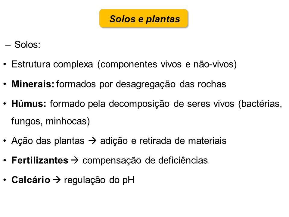 Solos e plantas –Solos: Estrutura complexa (componentes vivos e não-vivos) Minerais: formados por desagregação das rochas Húmus: formado pela decompos