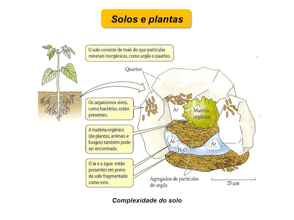 Solos e plantas Complexidade do solo