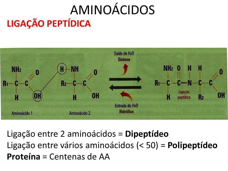 O CÓDIGO GENÉTICO CÓDIGO GENÉTICO: CÓDIGO GENÉTICO: Formado por 64 códons que codificam 20 aminoácidos que entram na formação das proteínas.